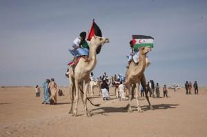 Kamele-3